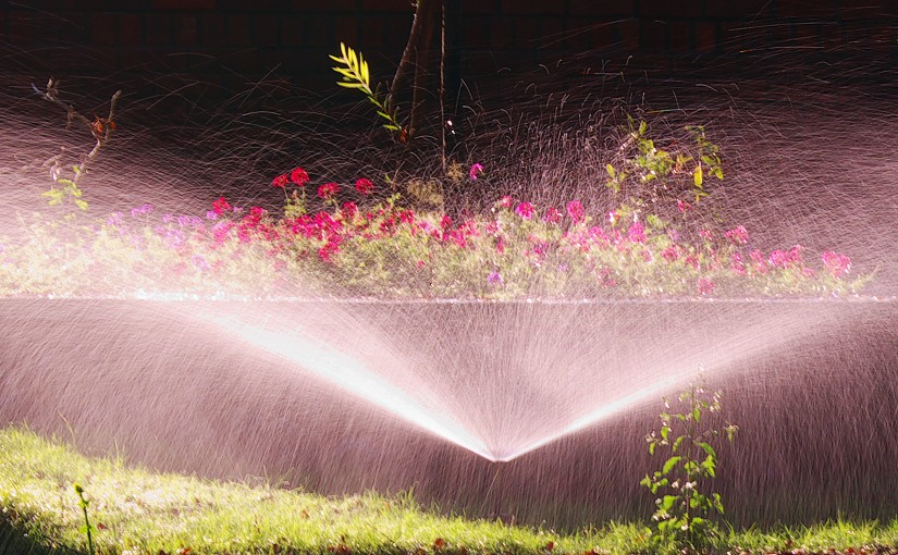 Get a Professional Sprinkler For The New Year